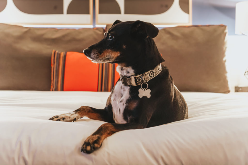Pet Friendly Hotels in DC